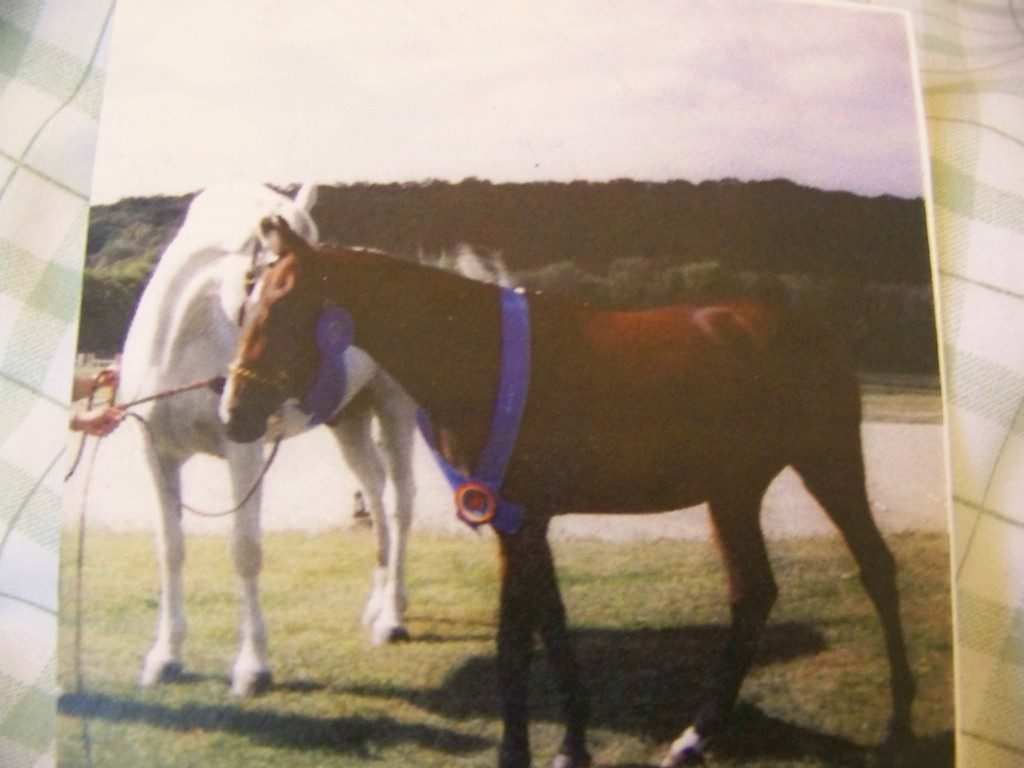 my April  won   the Litchfield  hunt  club  Thoroughbred   foal   first place  ribbon   ........!!!!   : )