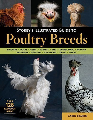 Storey's Illustrated Guide to Poultry Breeds