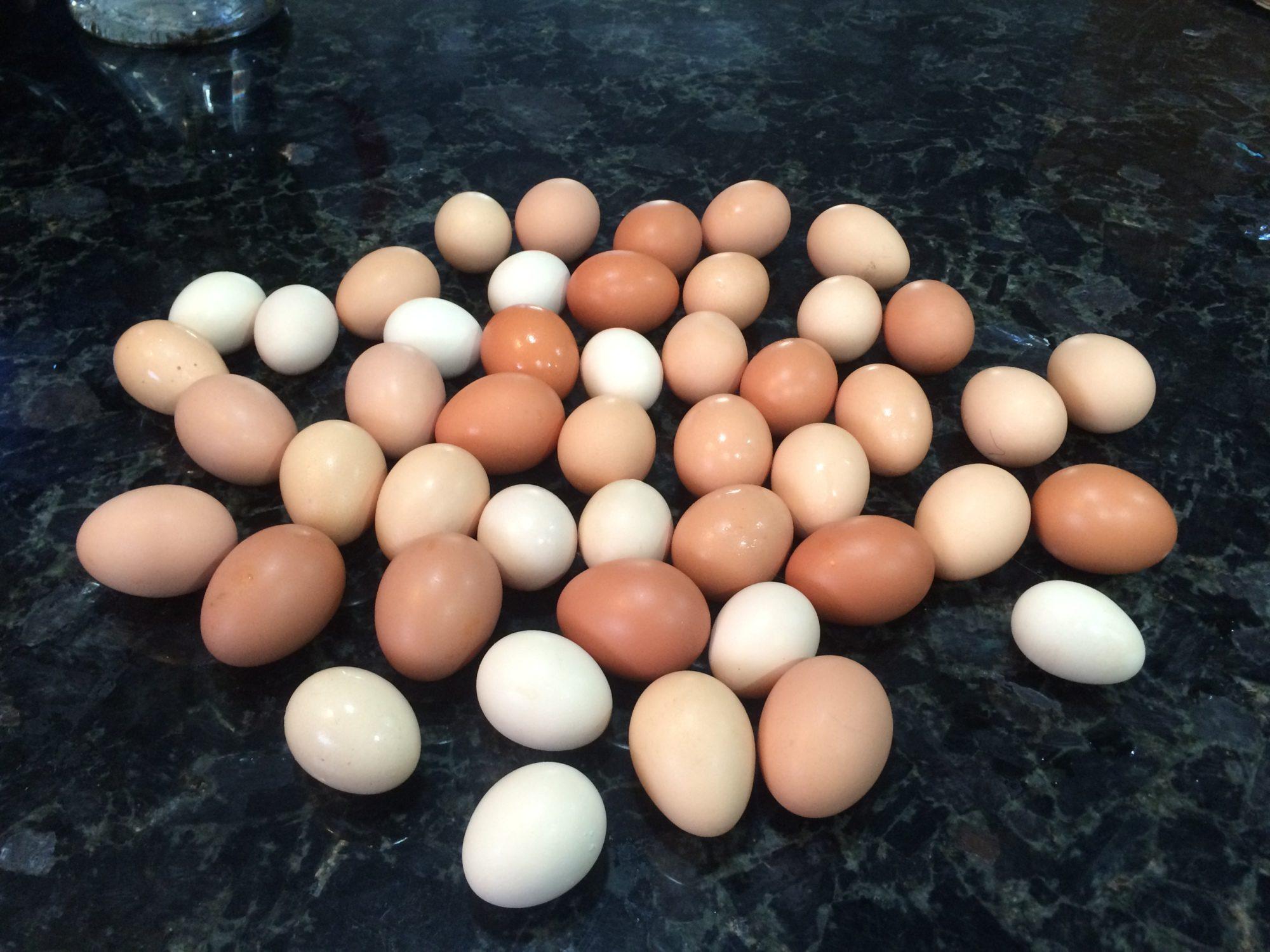 egg overload