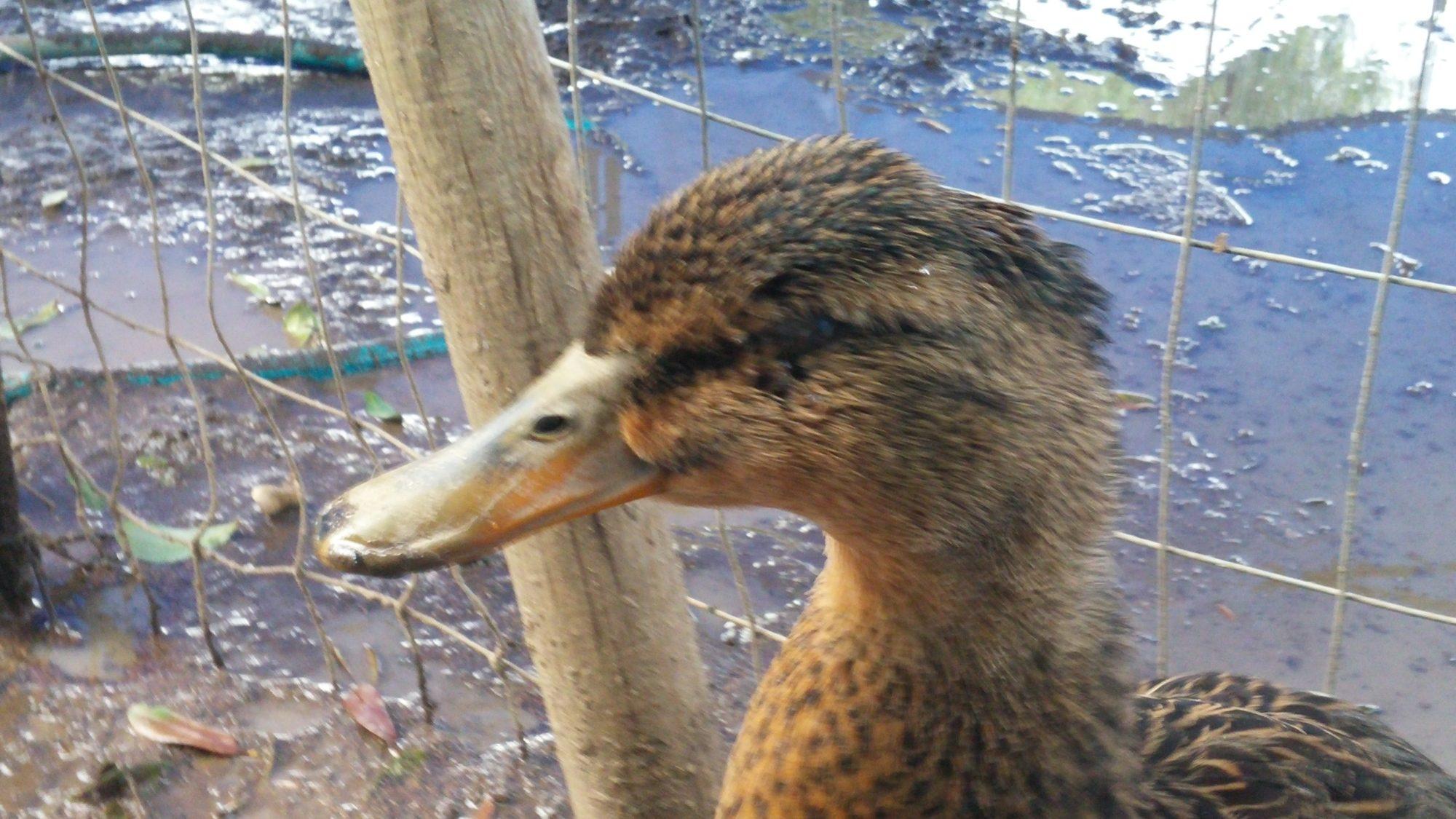 My. Duck wont open its eye