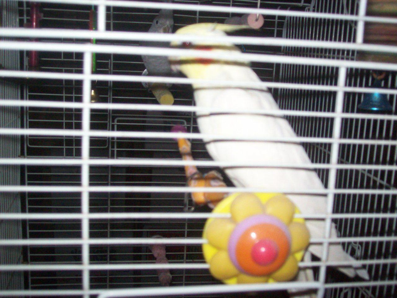 Tonys birds 255.jpg