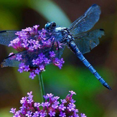 a-beautiful-Dragonfly.jpg
