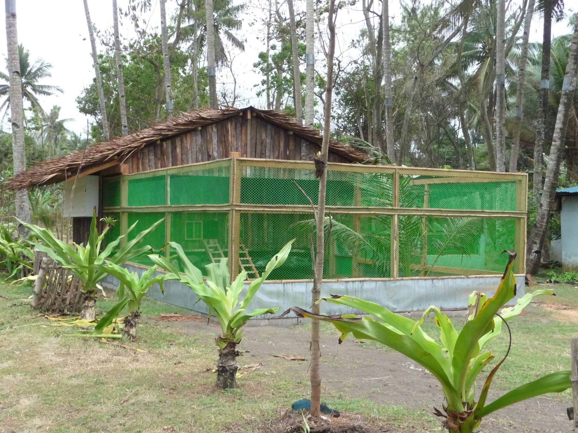The balay kubo nipa hut backyard chickens community for A frame hut plans
