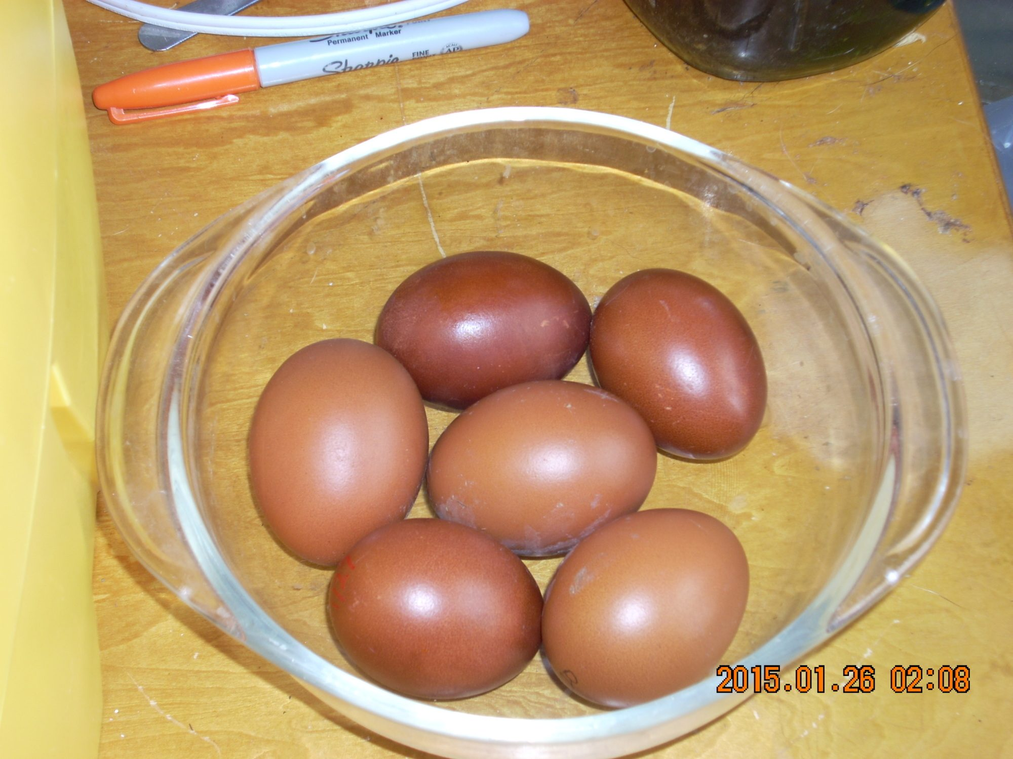 This is an example of this spring's eggs.  Taken from my Columbian Marans.  Taken in natural light, but the flash still went off and washed them out a bit.     I'm currently hatching eggs for myself.  Generation 8.  Will have chicks on the ground by Feb1st 2015.