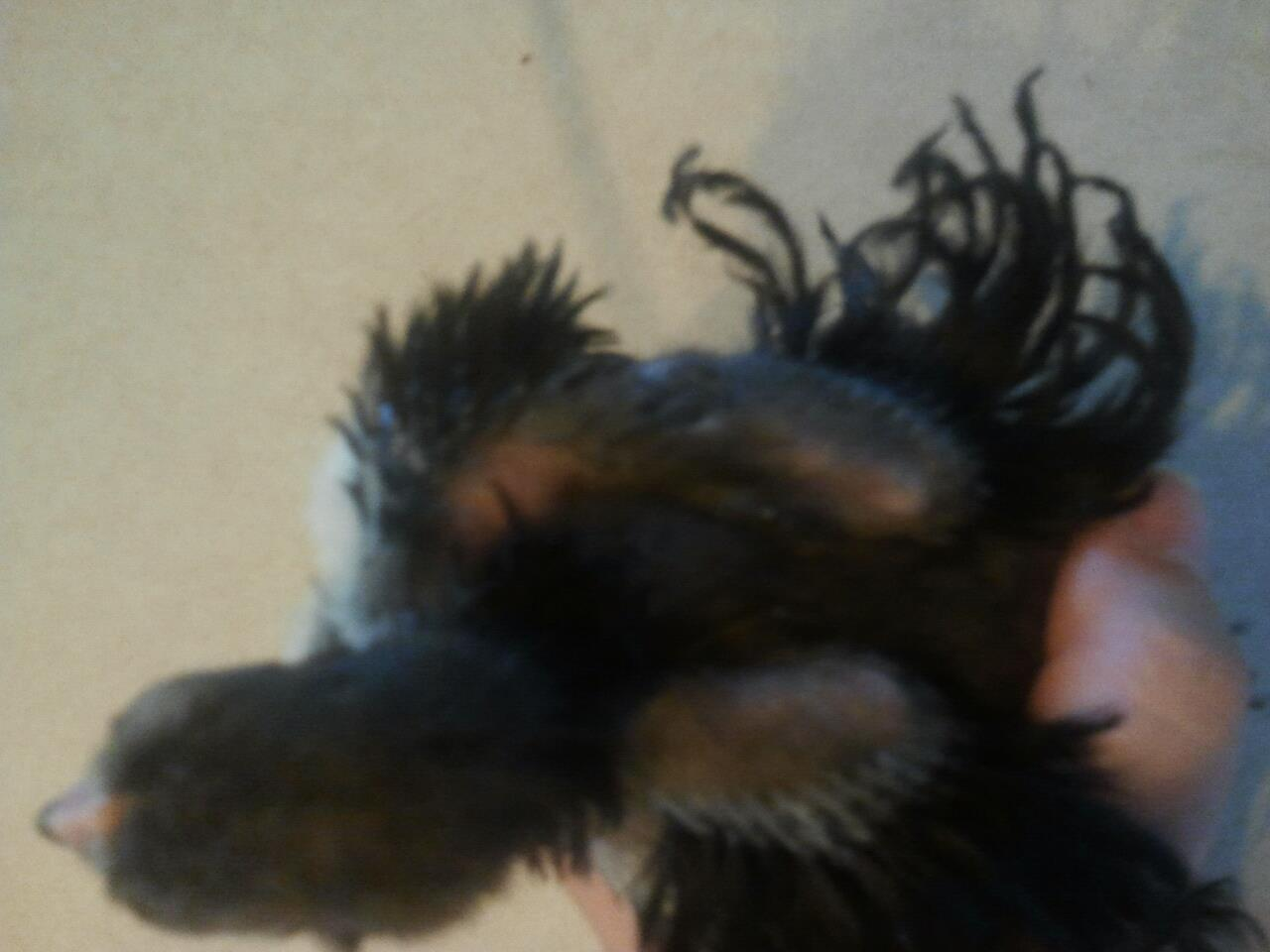 coloradogal's photos in Frizzle chick, baby hair still but concerned