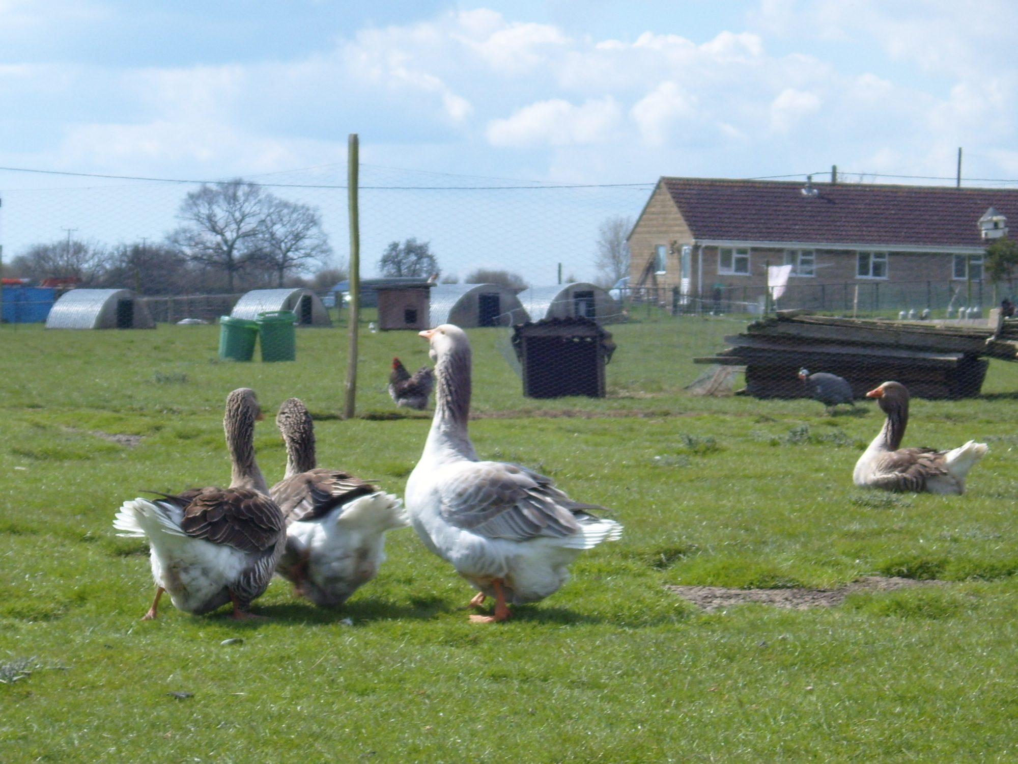 Poultry 713.jpg