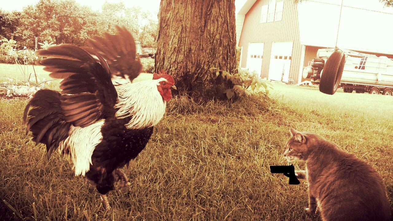 ChickenGoesRuff