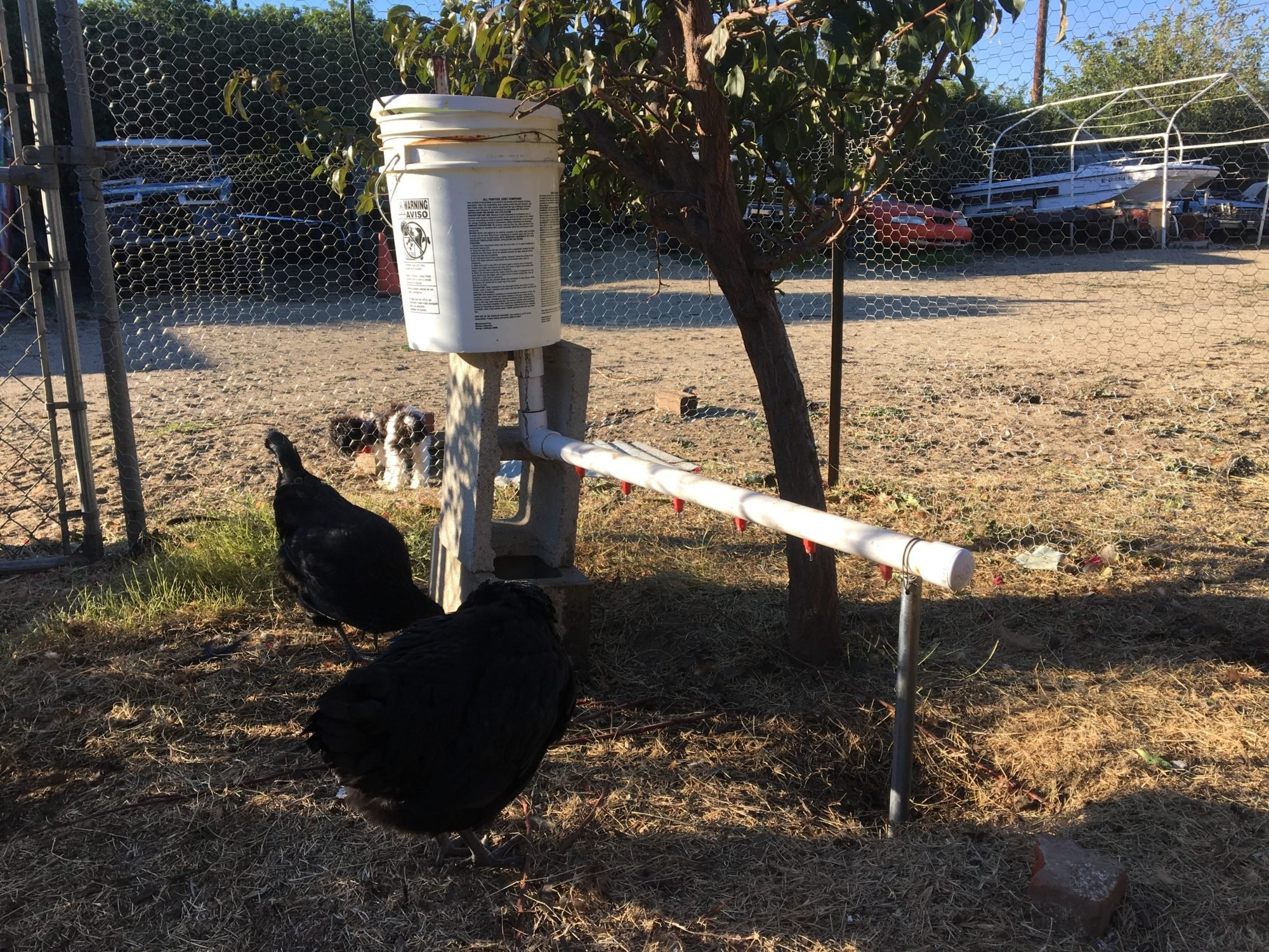 Waterer with a drip line to refill it every night.