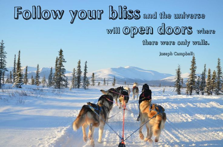 Sled dog quote 2.jpg