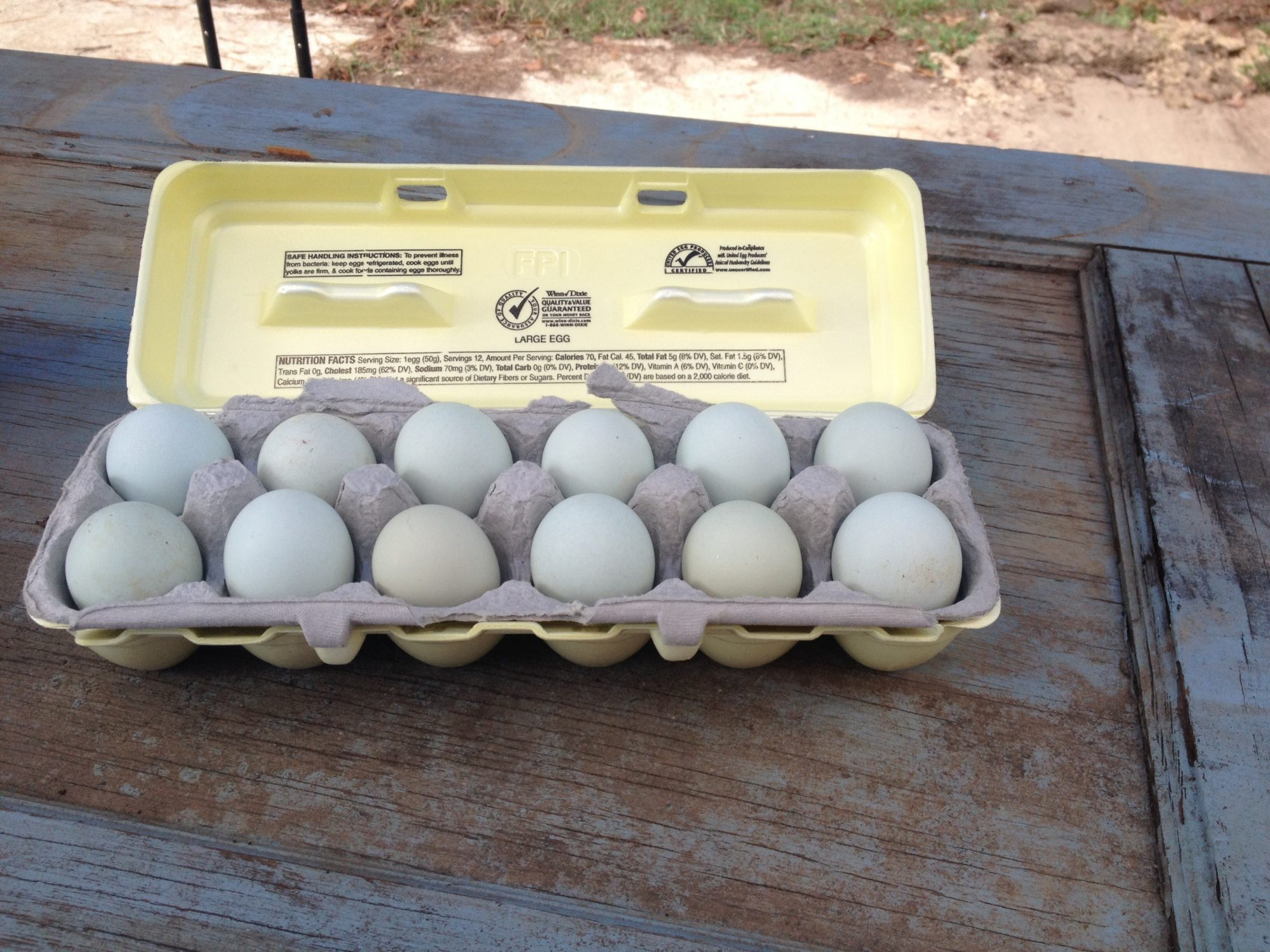 Ameraucana and EE pullet eggs!