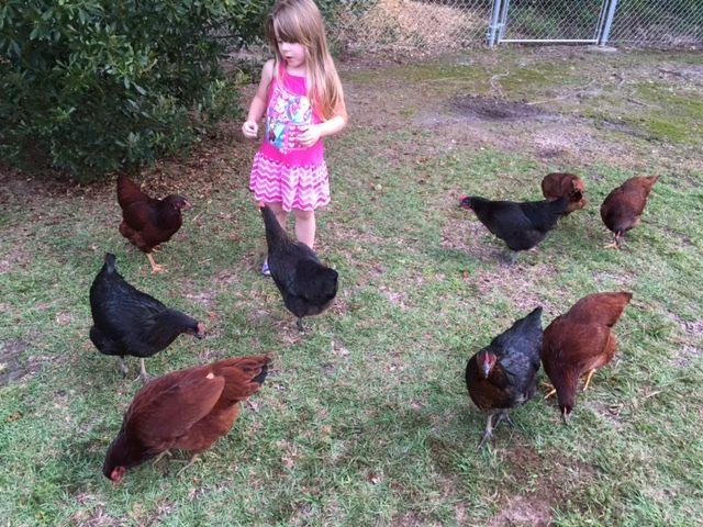 Tempe and her chickens :)
