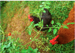 SueT's photos in Topic of the Week - Feeding Treats