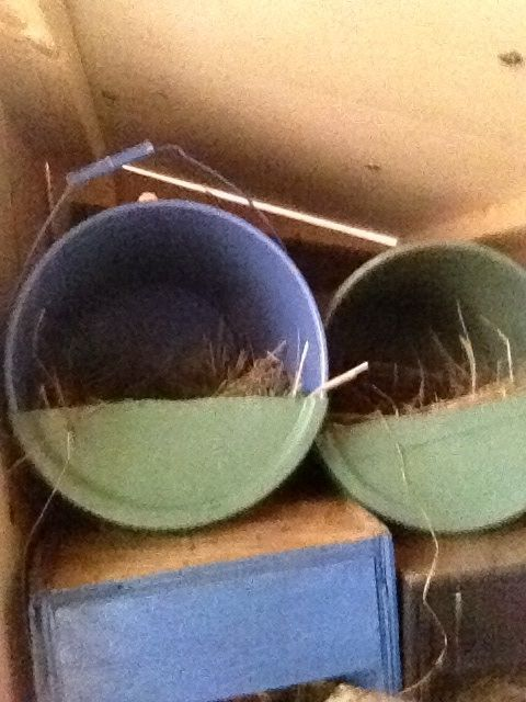 hiddenacres's photos in What do you use for nesting box materials?