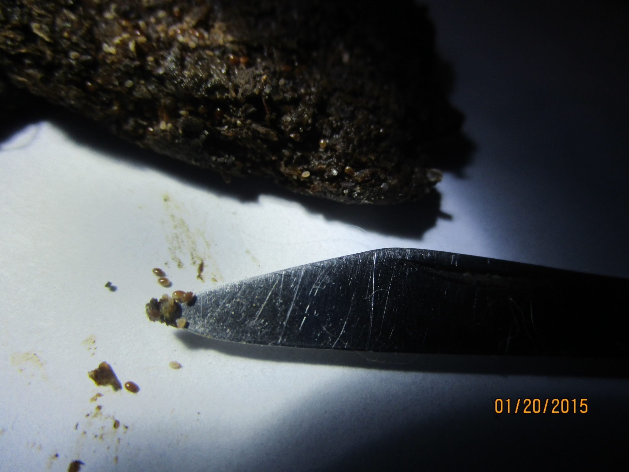 ramirezframing's photos in What type of bug?