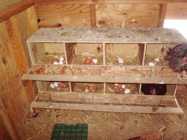 Гнезда для кур своими руками с фото