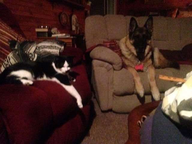 """One of five Barn Cat's, : """" Clovis"""" and our Kirby"""