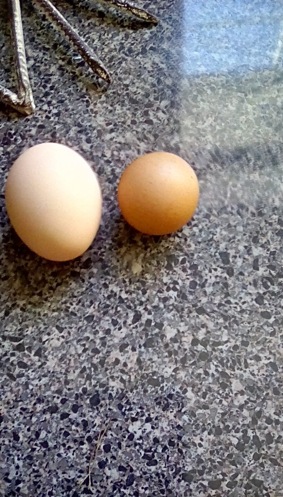 chicks are life's photos in Guinea eggs