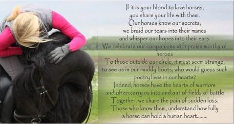Horse-quote.jpg