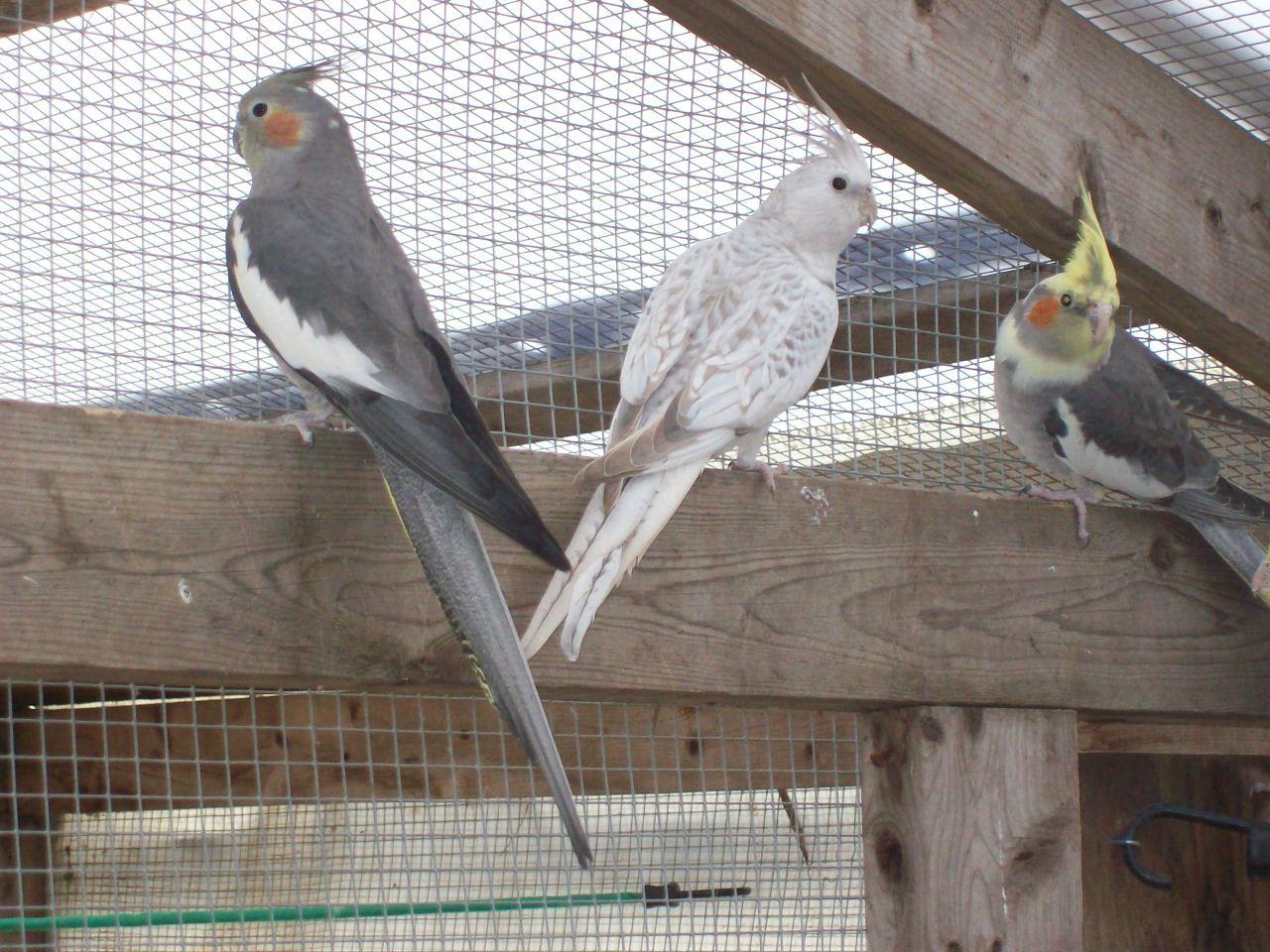 Tonys birds 245.jpg