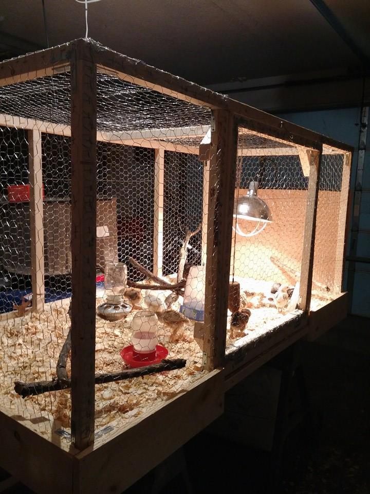 """Their new indoor cage. It has an open bottom and lifts up for cleaning and to put outside for """"play time""""."""