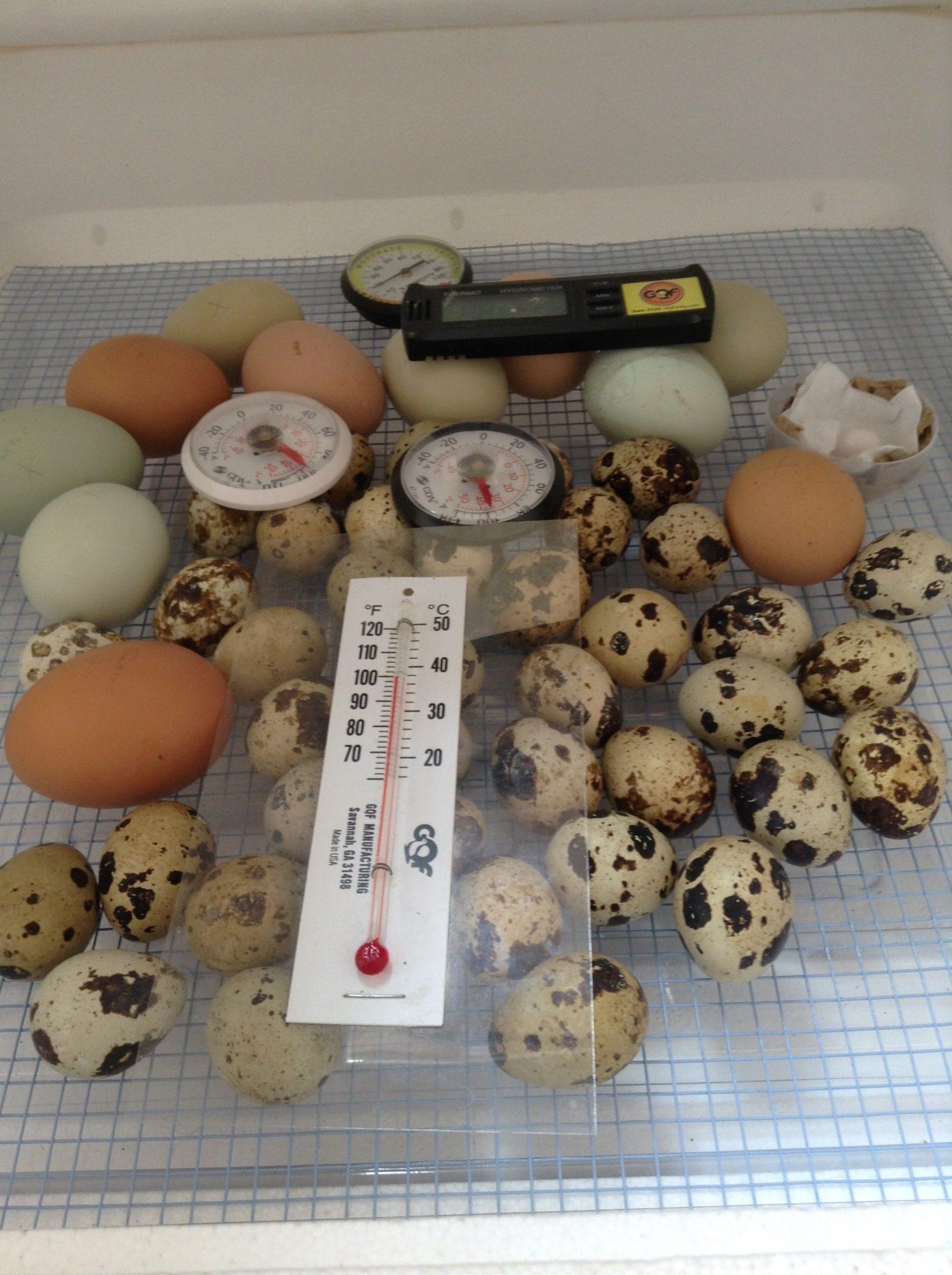 My incubators