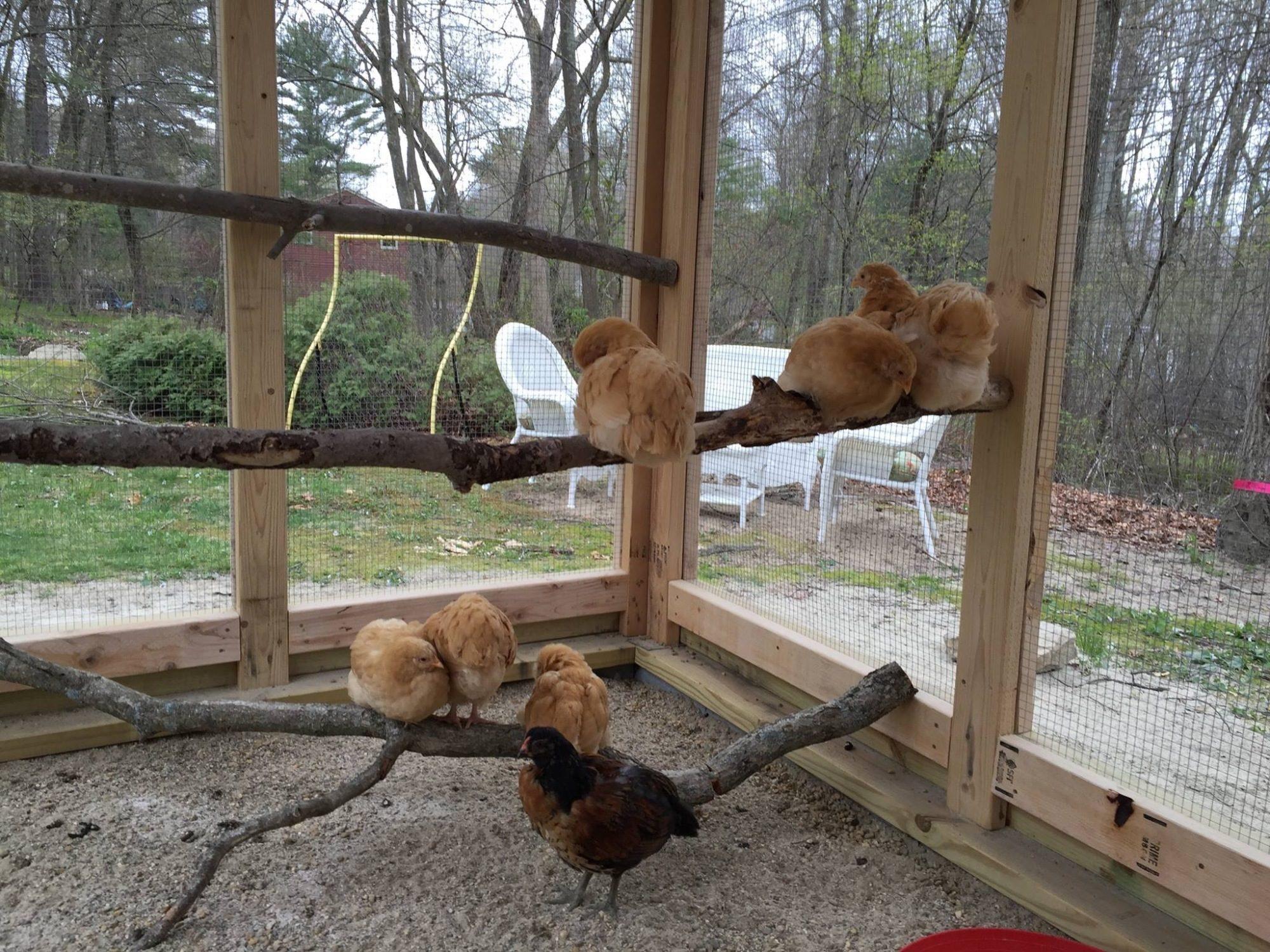 Our fancy hen house
