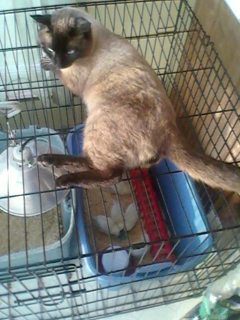 guard cat.jpg