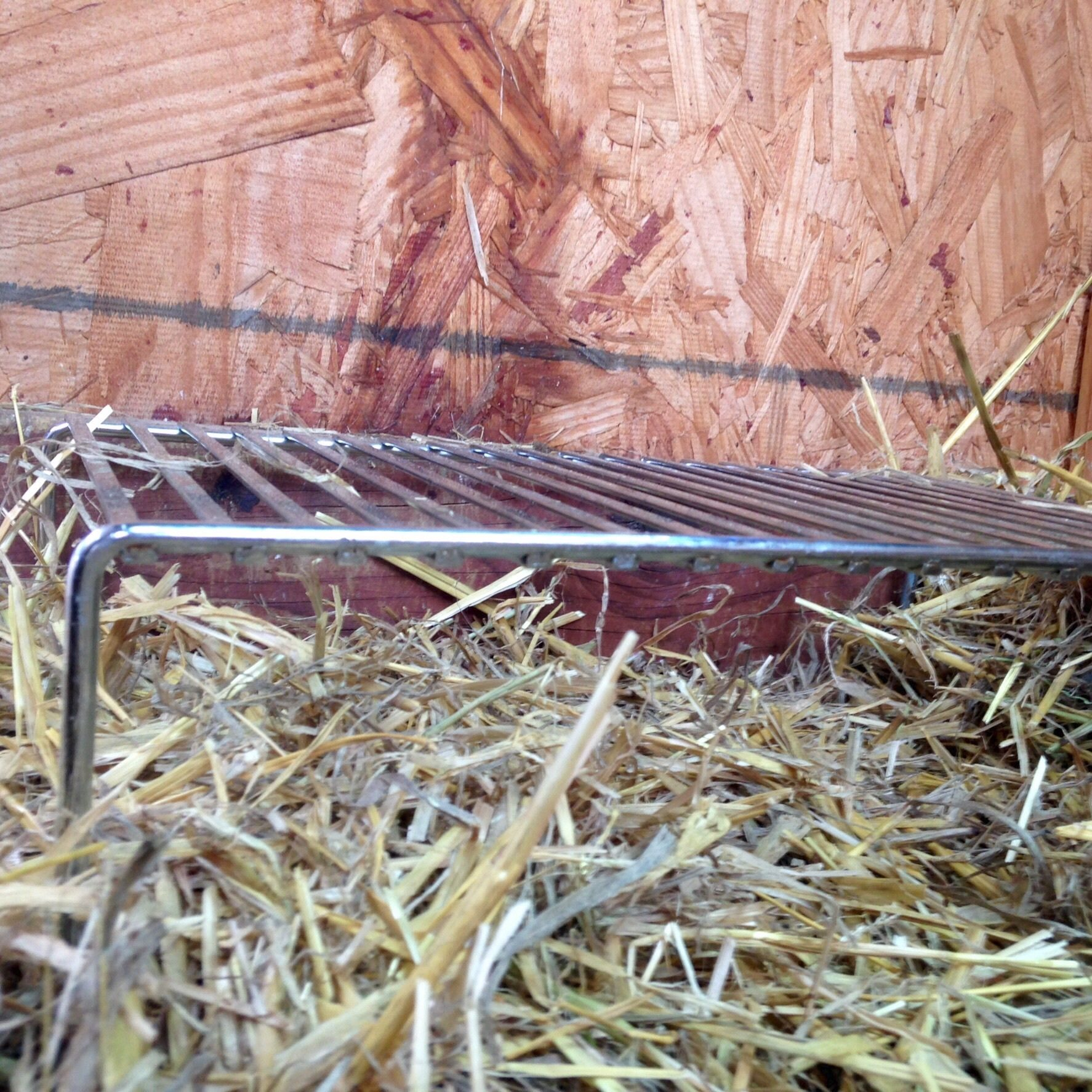 The gang quickly outgrew the tomato cage brooder so to give them more room I switch over to a wire rack,