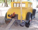 poultry-in-motion.jpg
