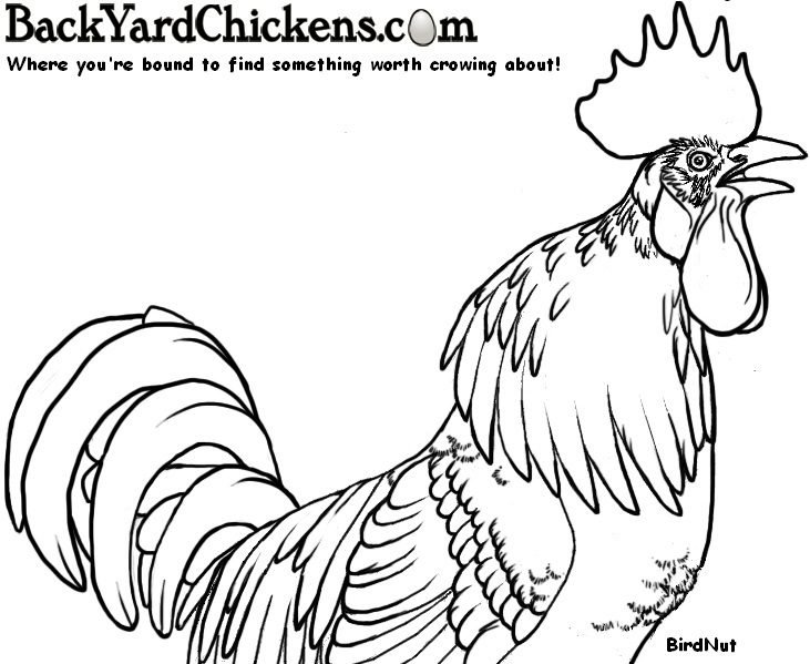 Chicken Coloring Books Pictures And Art By The Byc Community ...