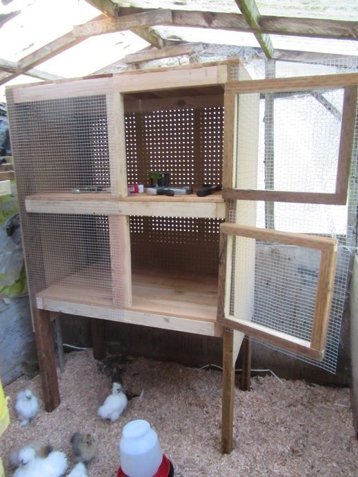 New chick cabinet for the old chick house. Useful for brooding silkie chicks. Needs to be wired now.