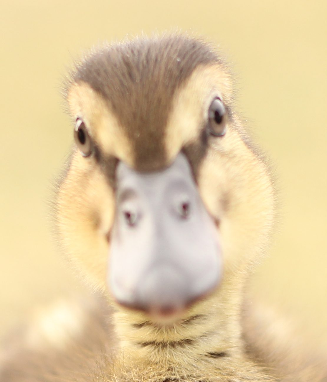 Spyderk117 profile picture