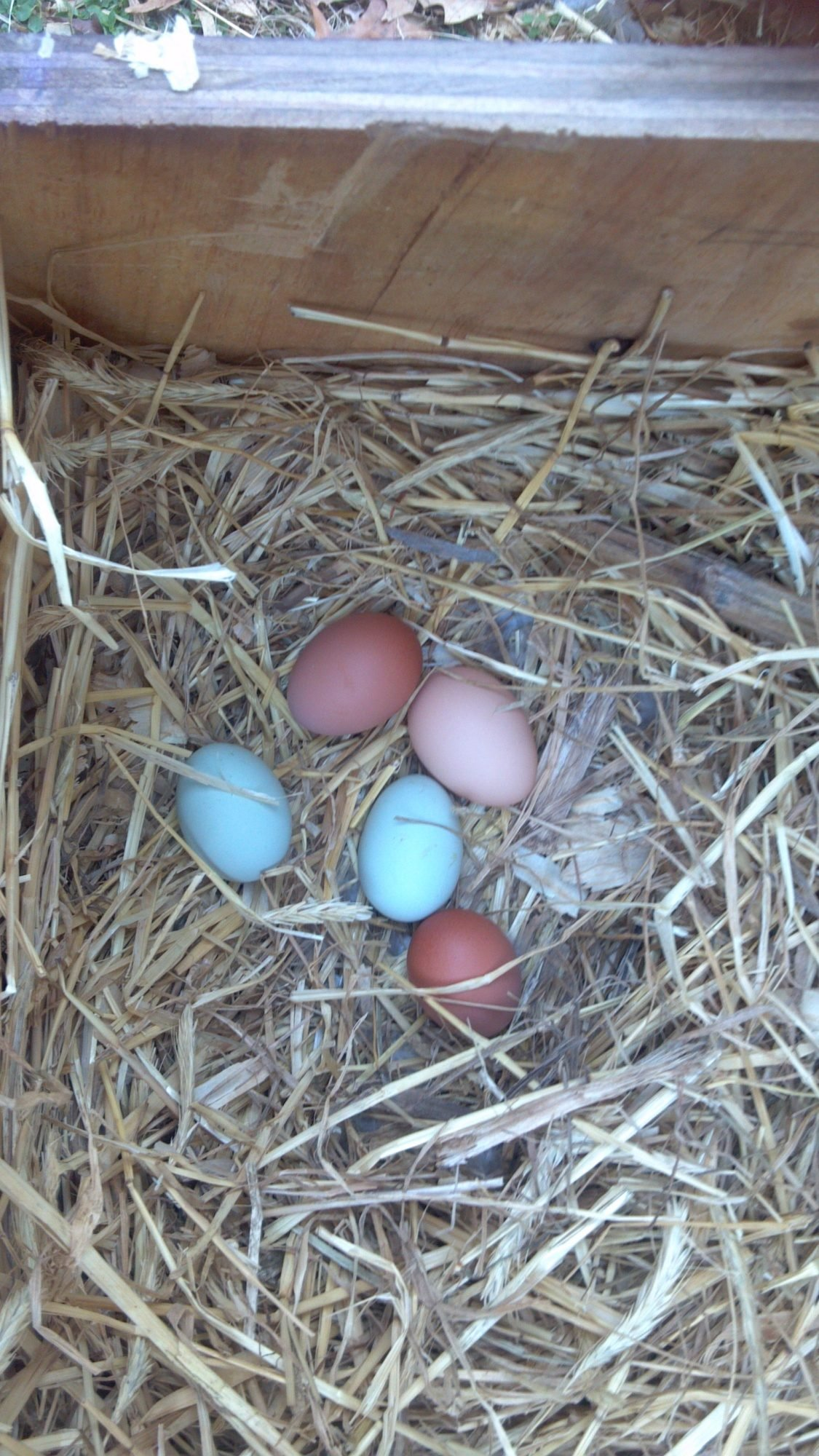 SOMD Chicken Mafia's photos in how many Eggs you get today