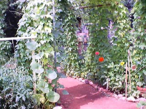 the entrance into  my  magic  garden  : )