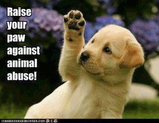 against animal abuse.jpg