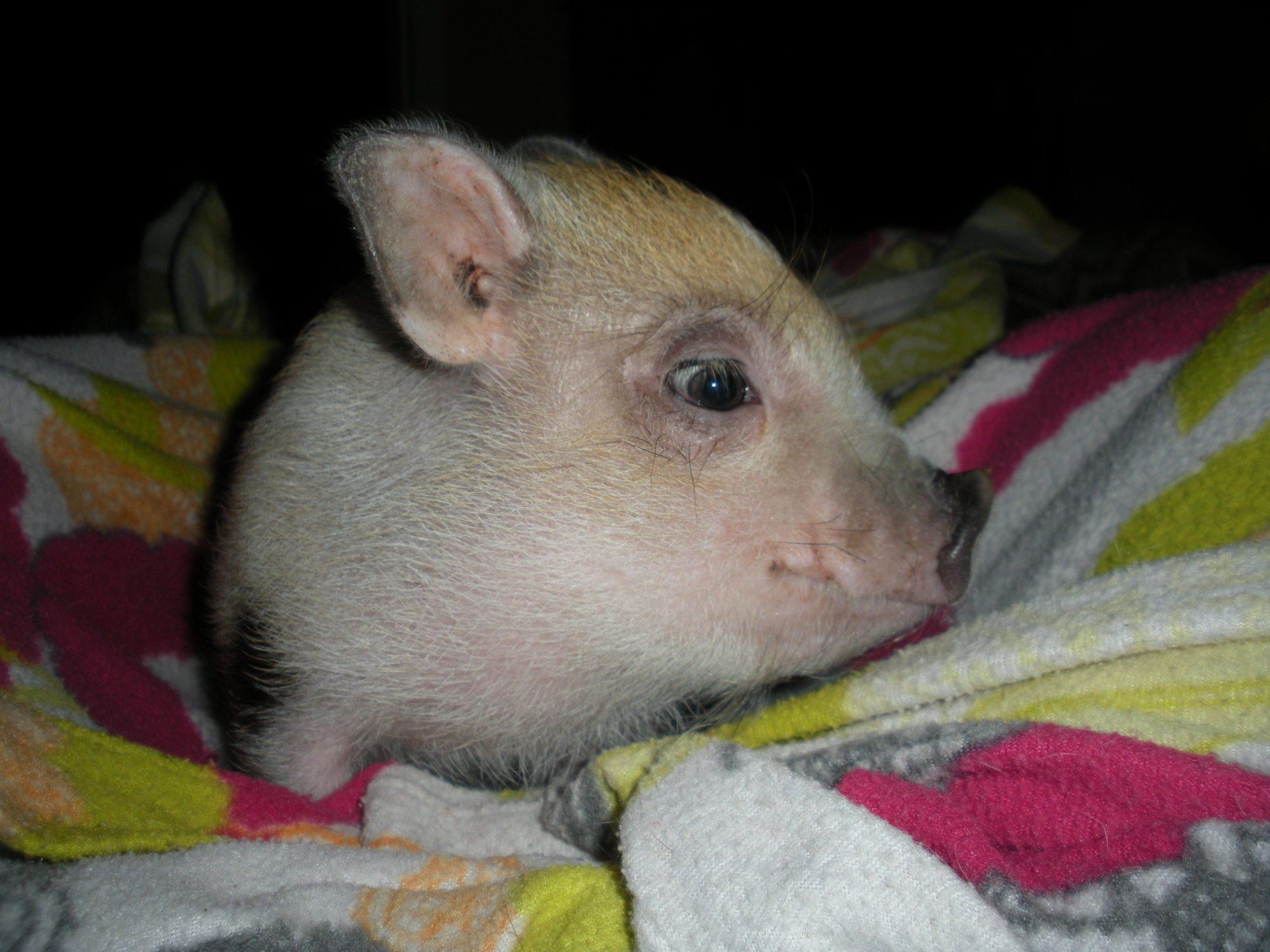 PugBug profile picture