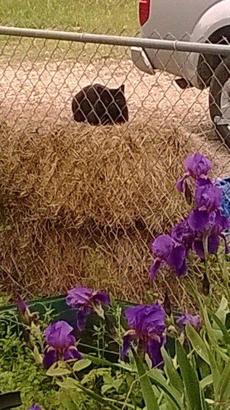 Neko our barn cat