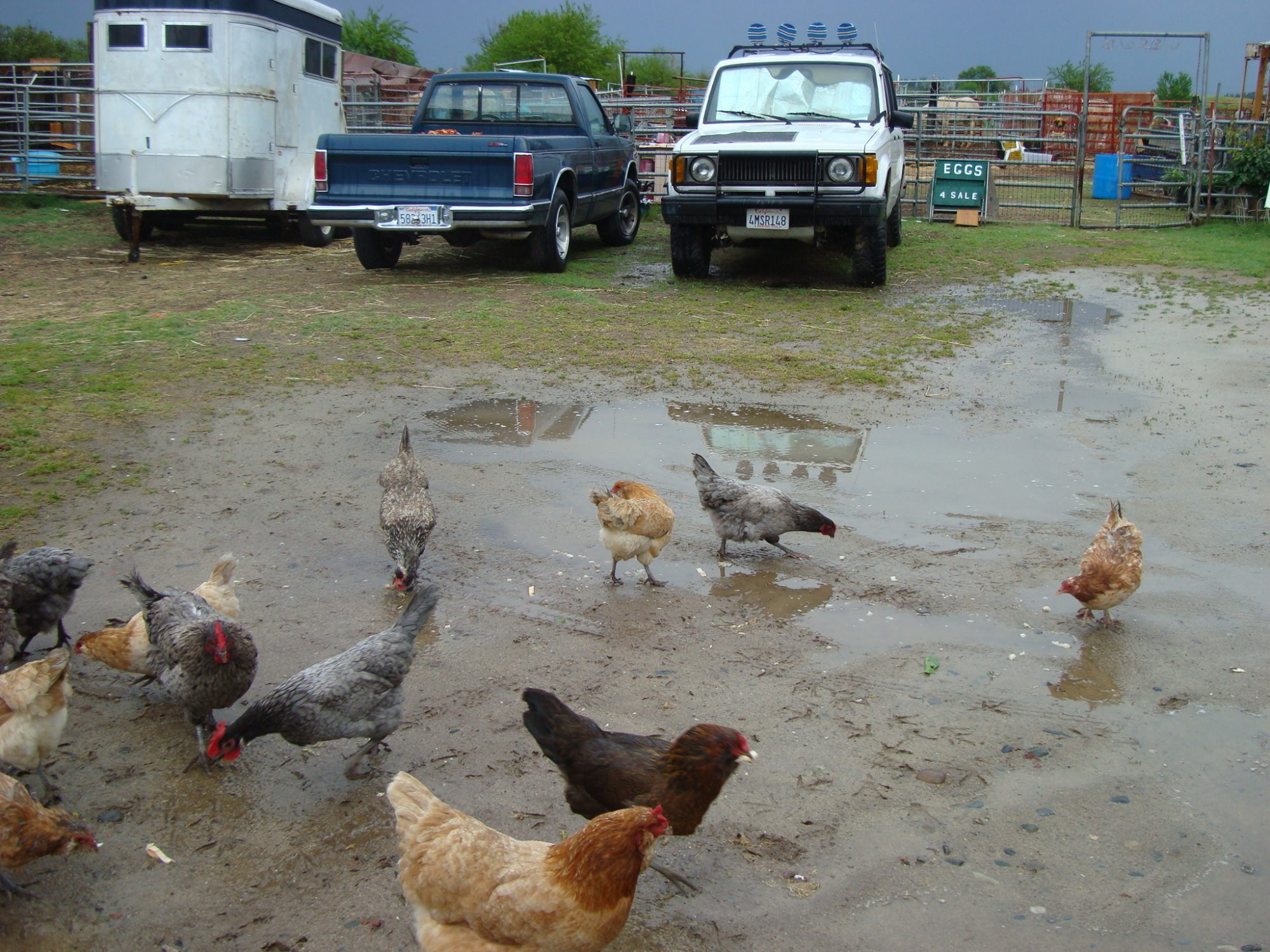 Sueg4332's photos in Contest #14 - Wet Poultry Contest for the 6th Annual BYC Easter Hatchalong!