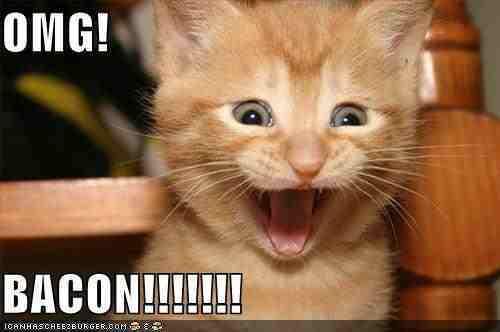 120x120px-LS-387f36de_omg-bacon-funny-cat.jpeg