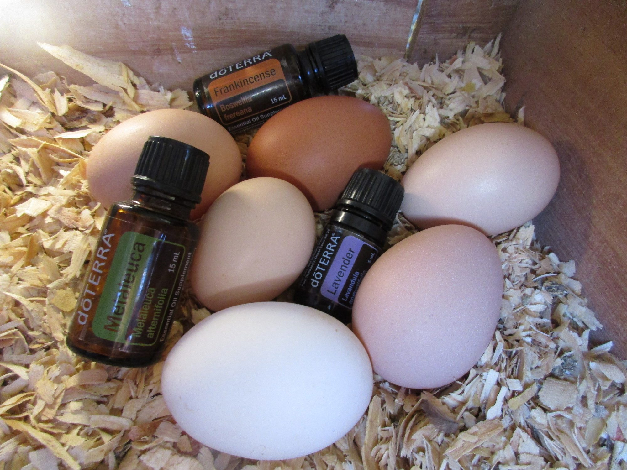 Essential Oils and chickens!
