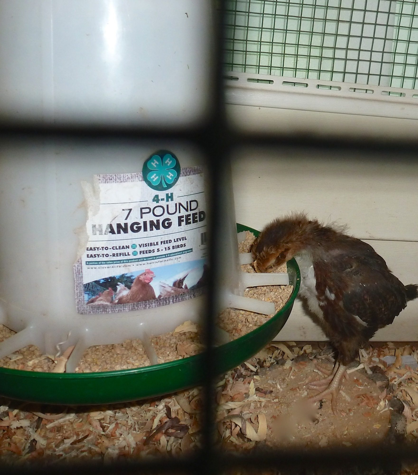 SueT's photos in Why hang feeder off the ground?