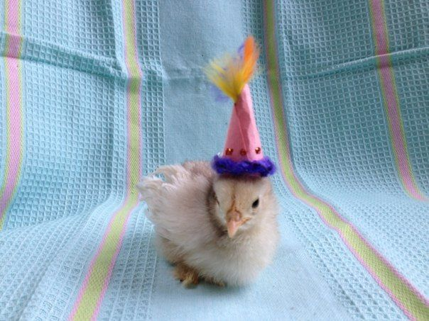 Frindizzle as a chick.jpg