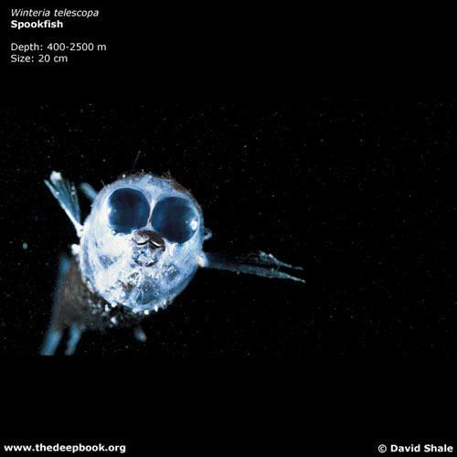 thedeepbook-spookfish-shale_p52_72-1.jpg