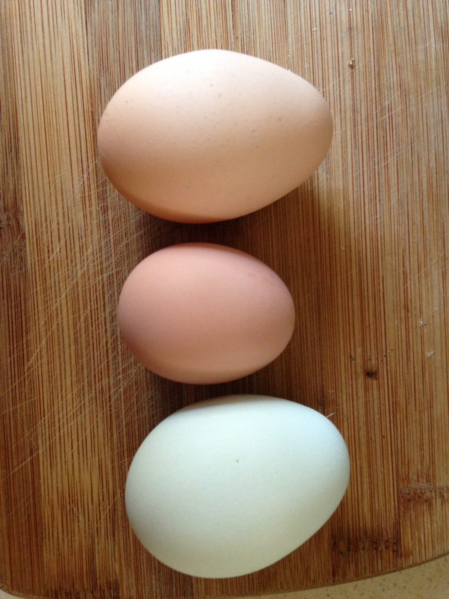 First Pullett egg from our flock hatch, they are 22 weeks now.