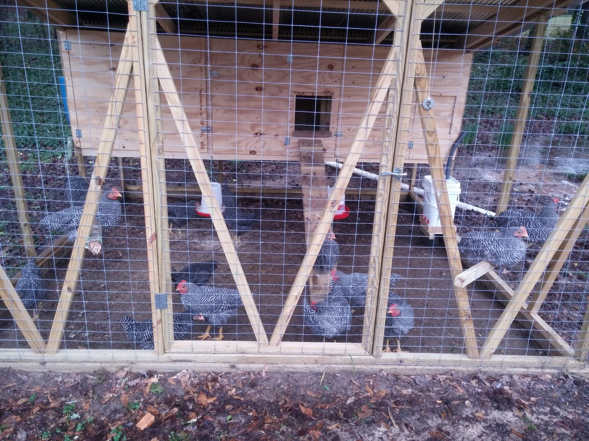 Barred Rock coop and pen