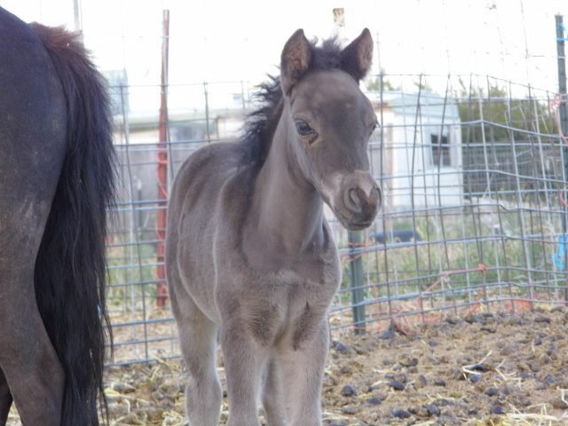 foals 2012 045.JPG