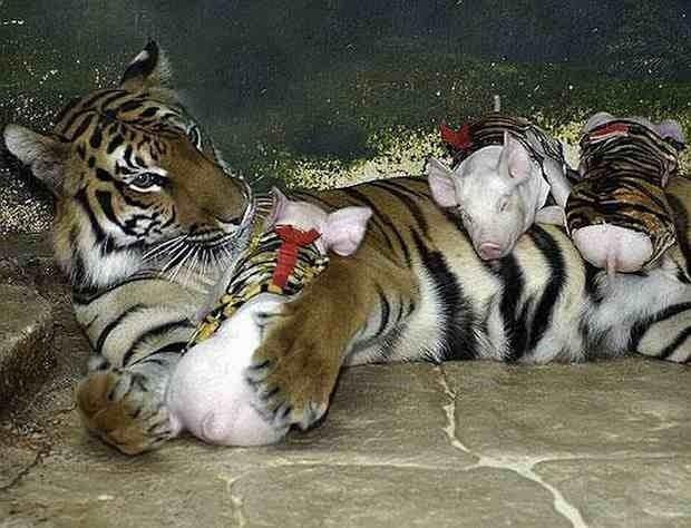 Strange-Animal-Friends-Banned-Hollywood-13.jpg