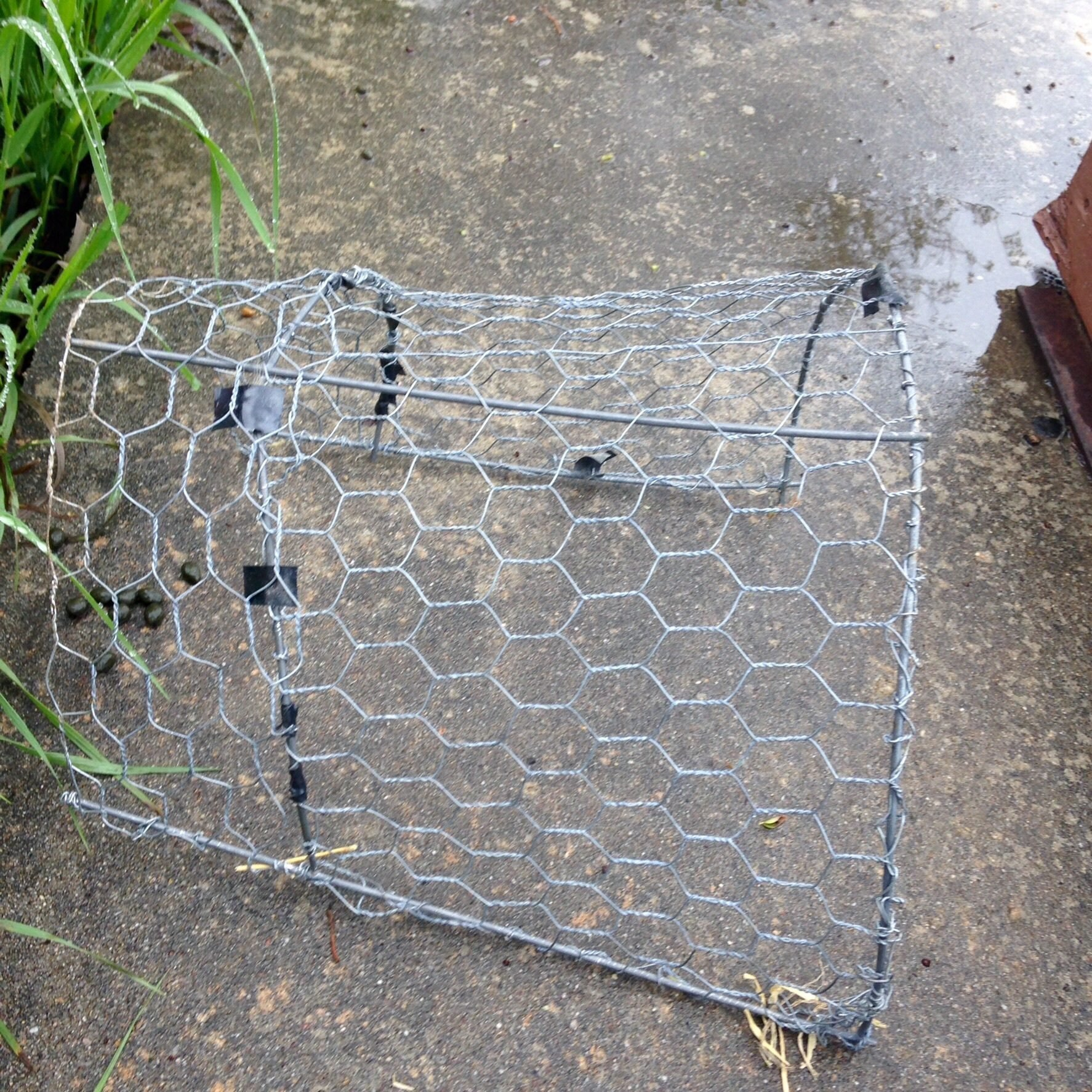 After initial run I added more chicken wire to help support the chicks running all around on the top of the brooder.
