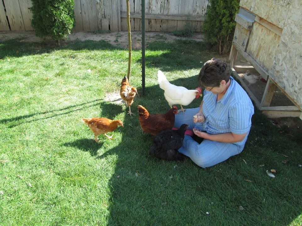 Cynthia12's photos in Chicken Breed Focus - Leghorn