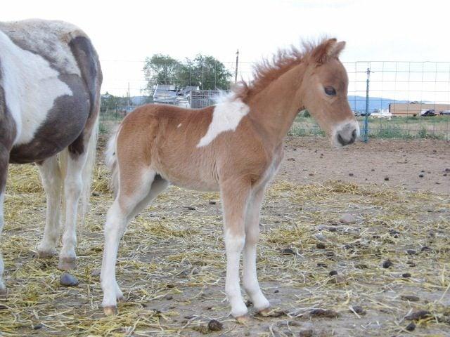foals 2012 030.JPG